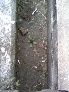 箕面の裏はゴミだらけ
