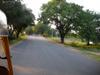 Chennai_tamarind